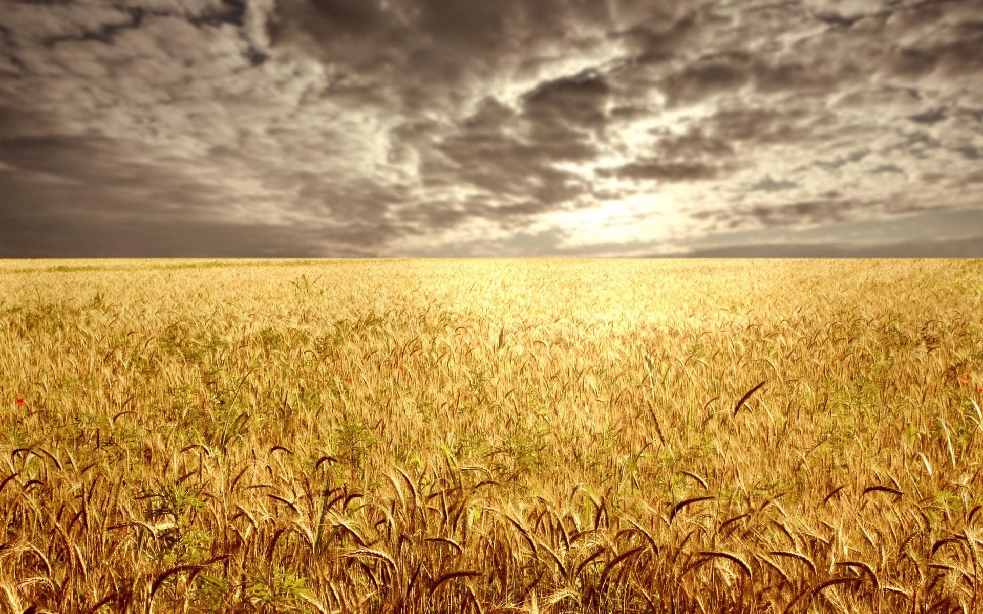 Weat fields