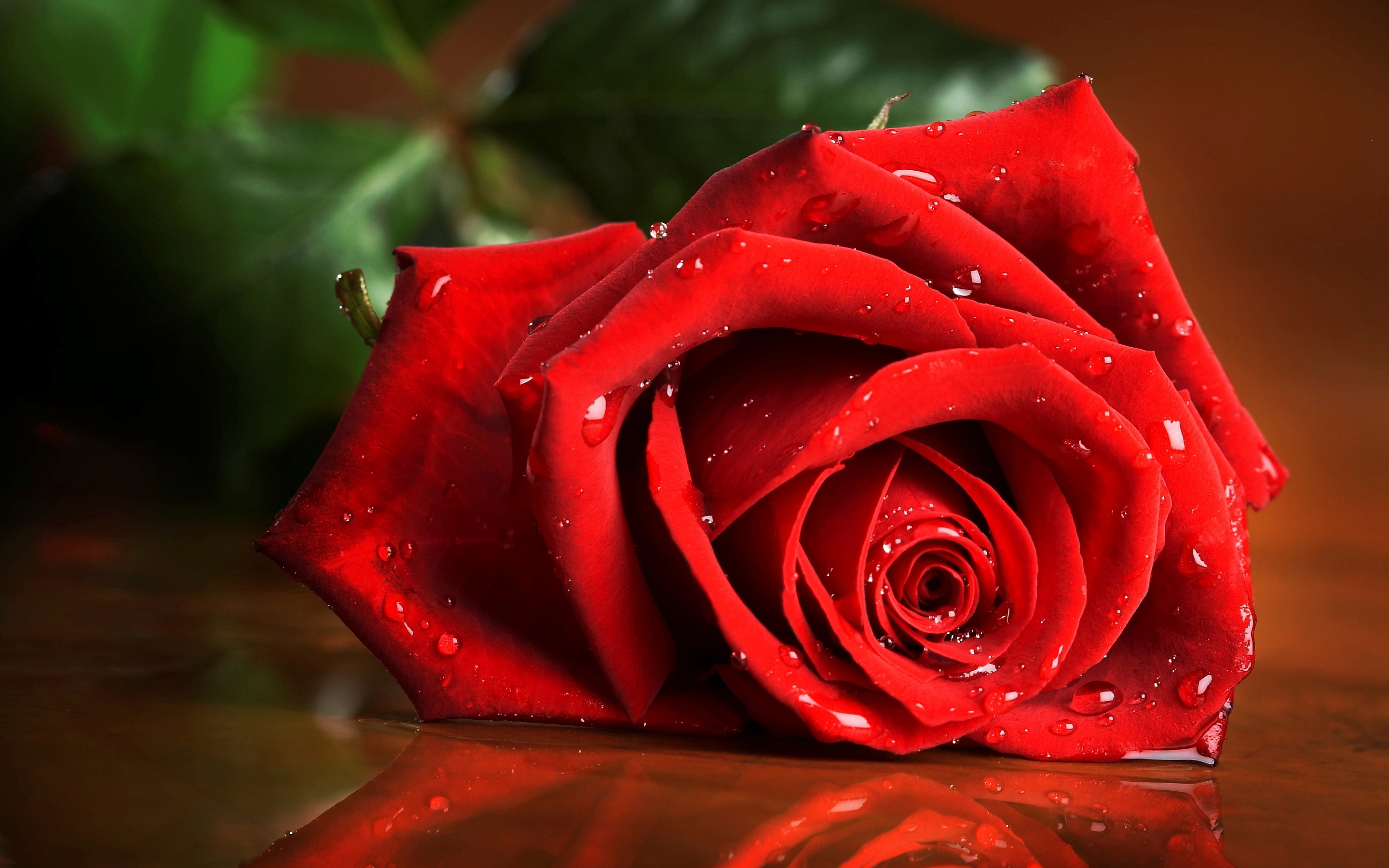 Wet rose hd