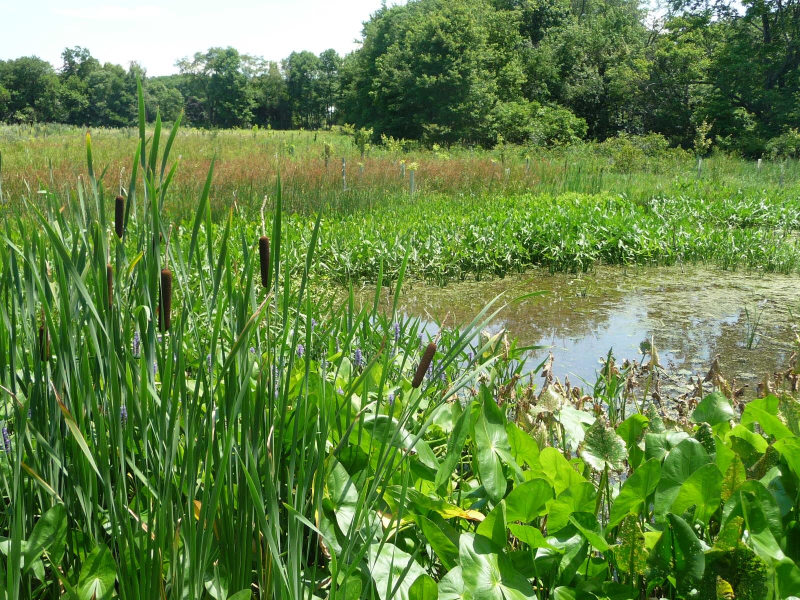 Wetlands of Paunacussing