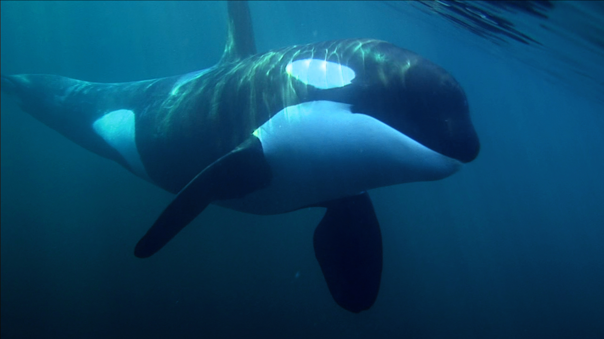 the-whale-movie-image-1