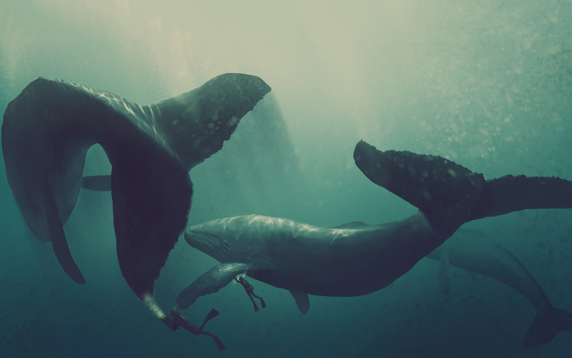 Whales divers art
