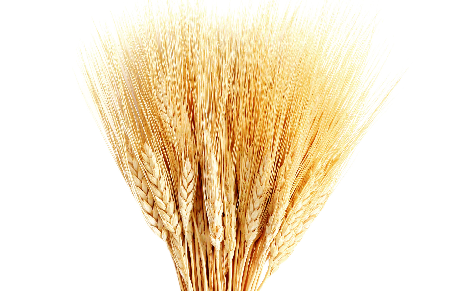 Find Heritage in Your Wheat