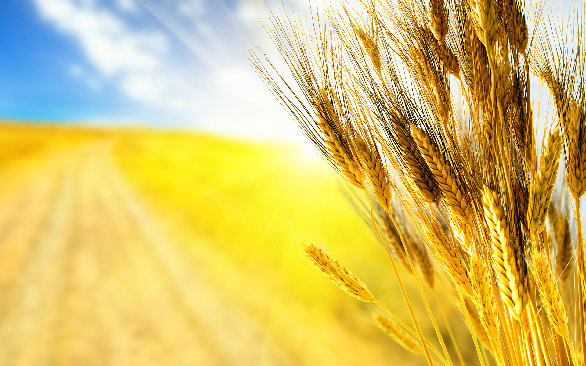 HD Wallpaper | Background ID:191251. 1920x1200 Earth Wheat