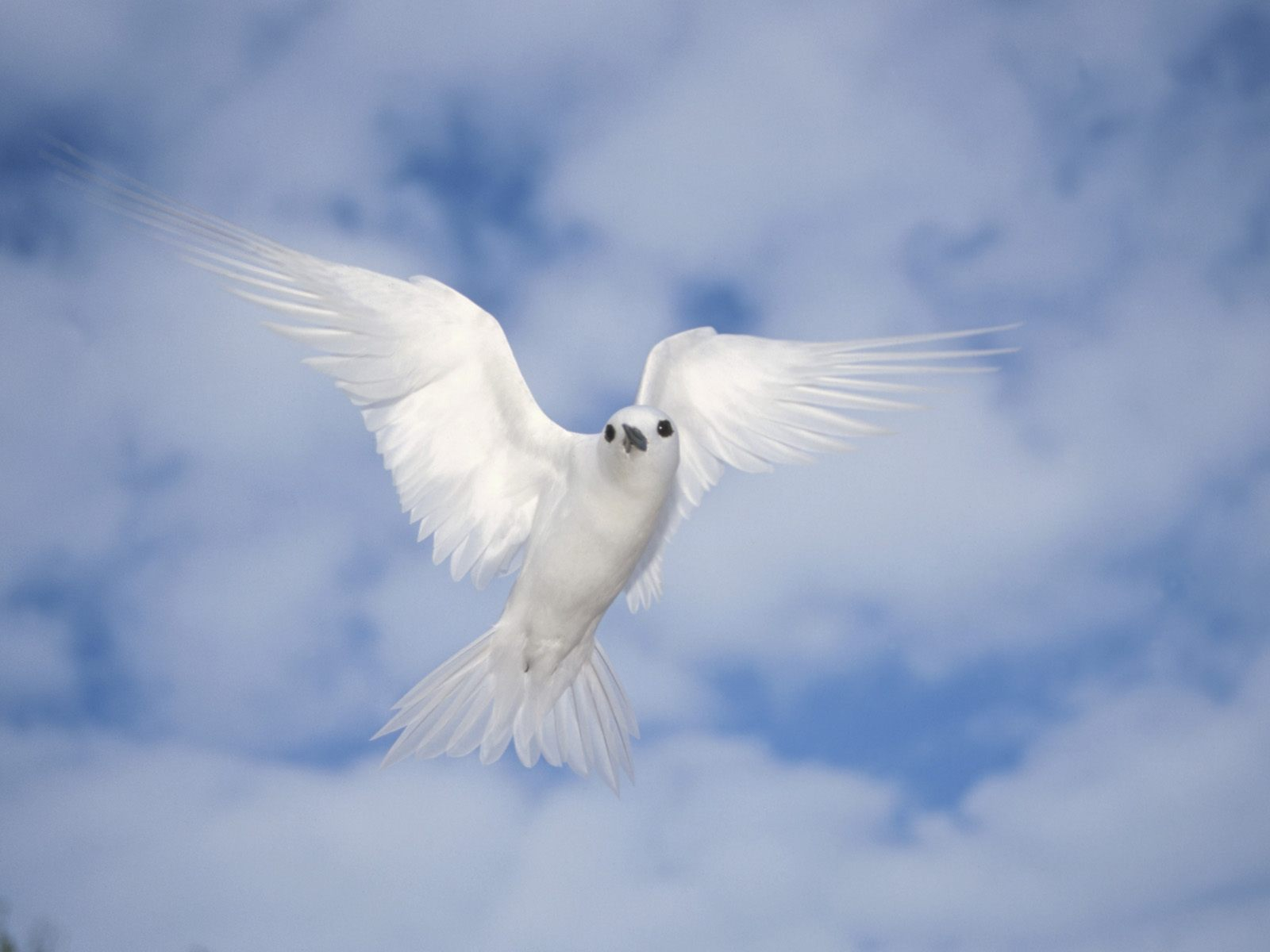 White Birds Photo