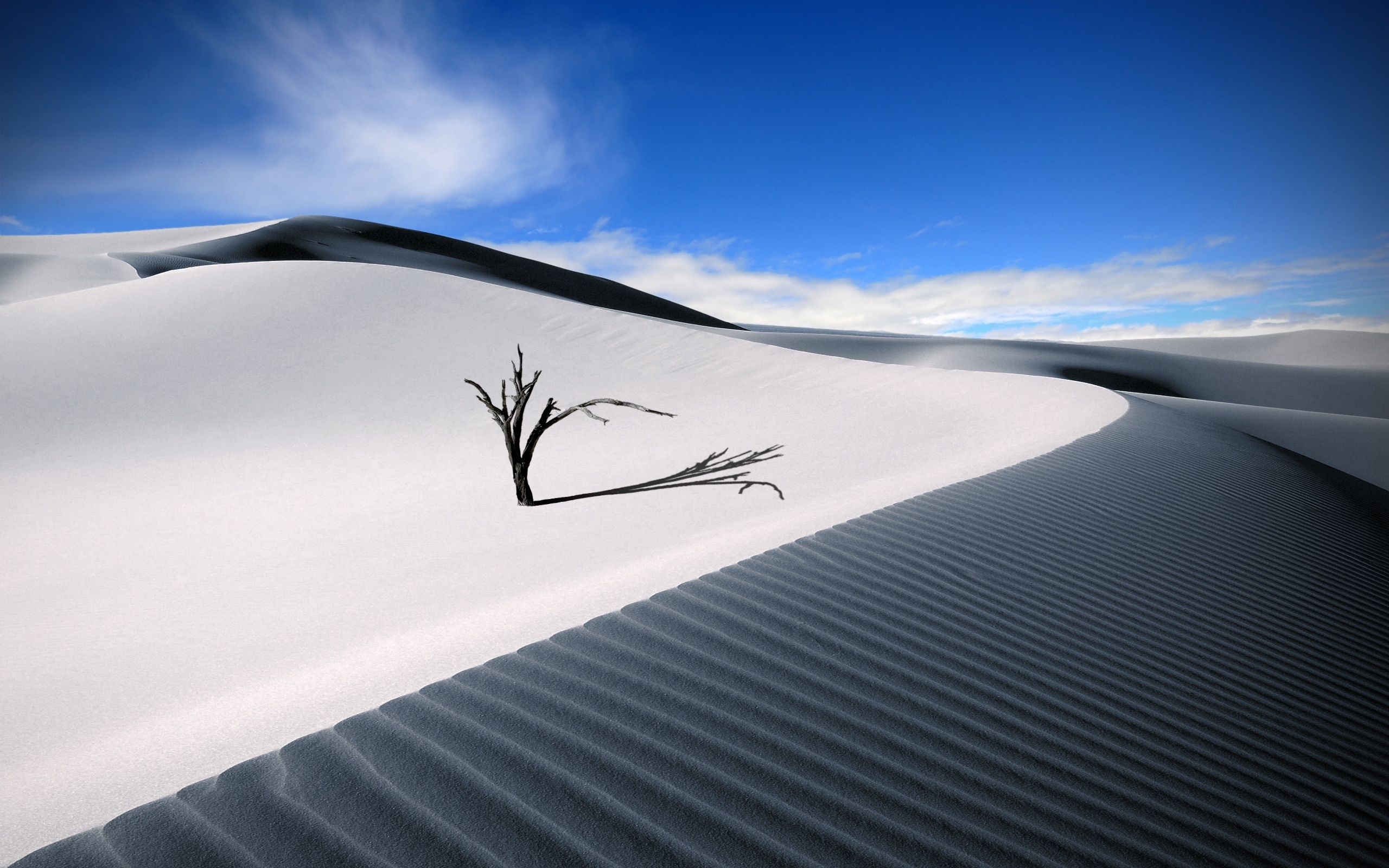 Tree Branches in White Desert Sand (click to view)