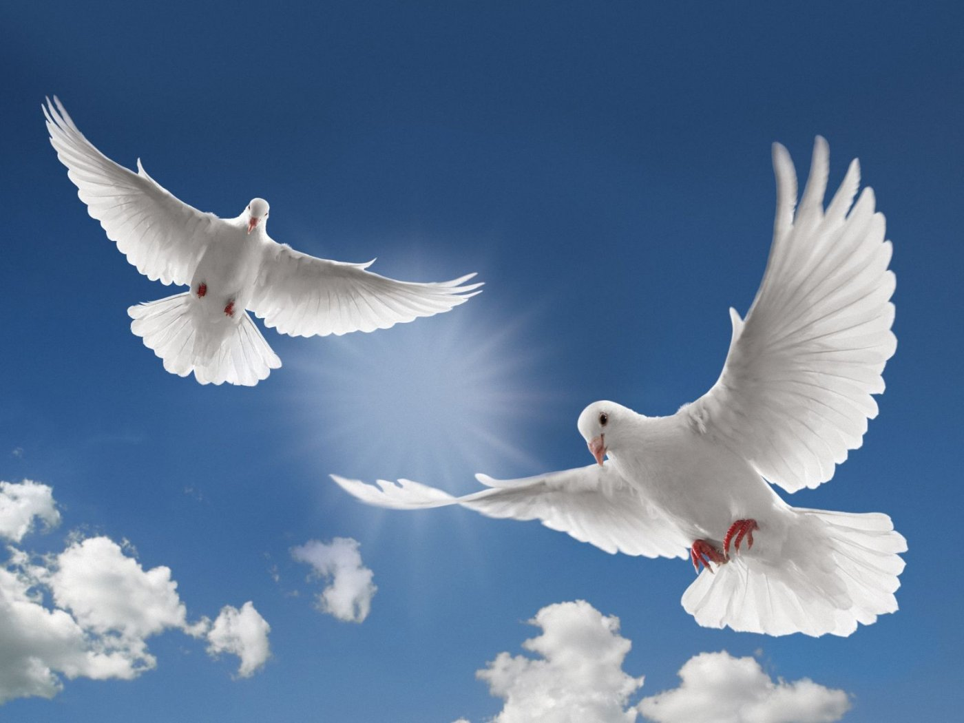 White Dove Bird Flying Photo