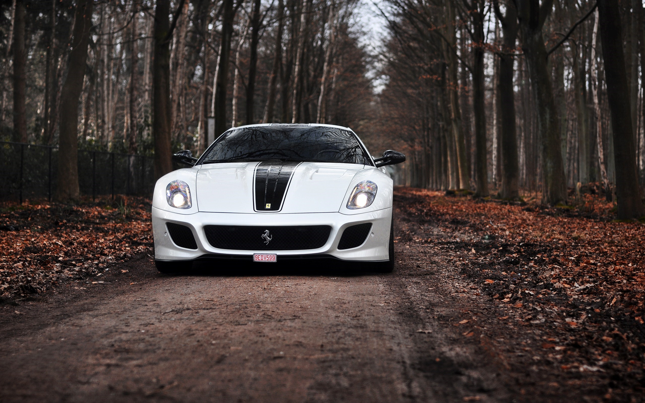White Ferrari 599 GTO Road Forest Autumn