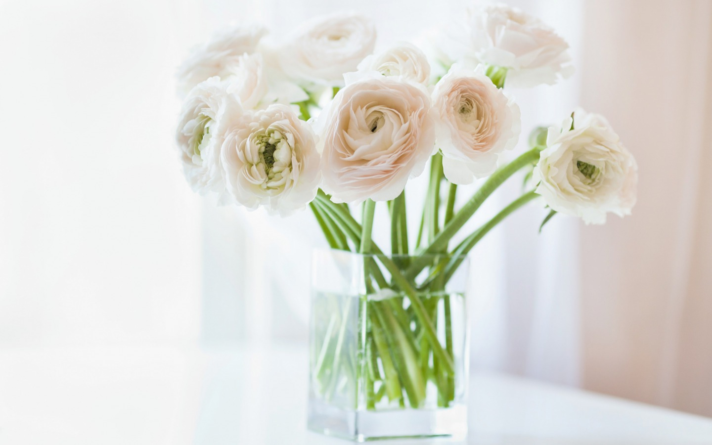 White Flowers Images 19 HD Wallpapers