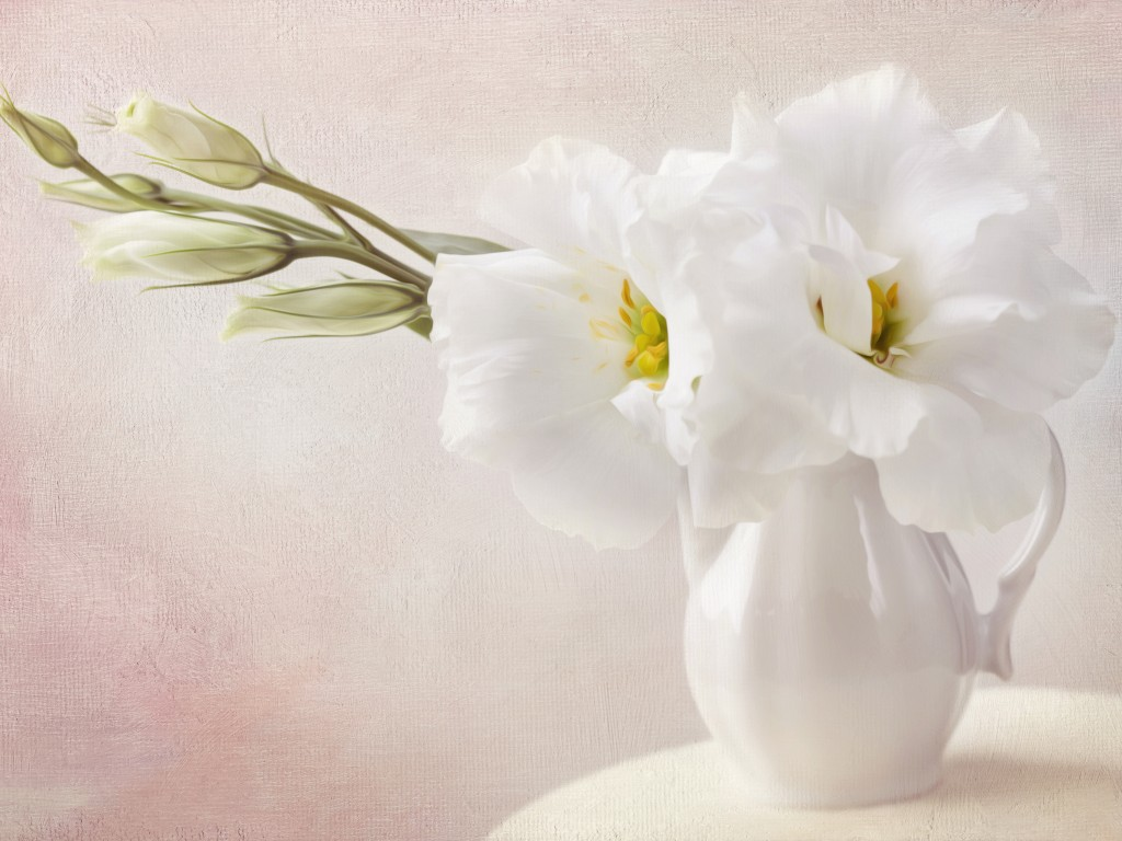 White Flowers Wallpaper