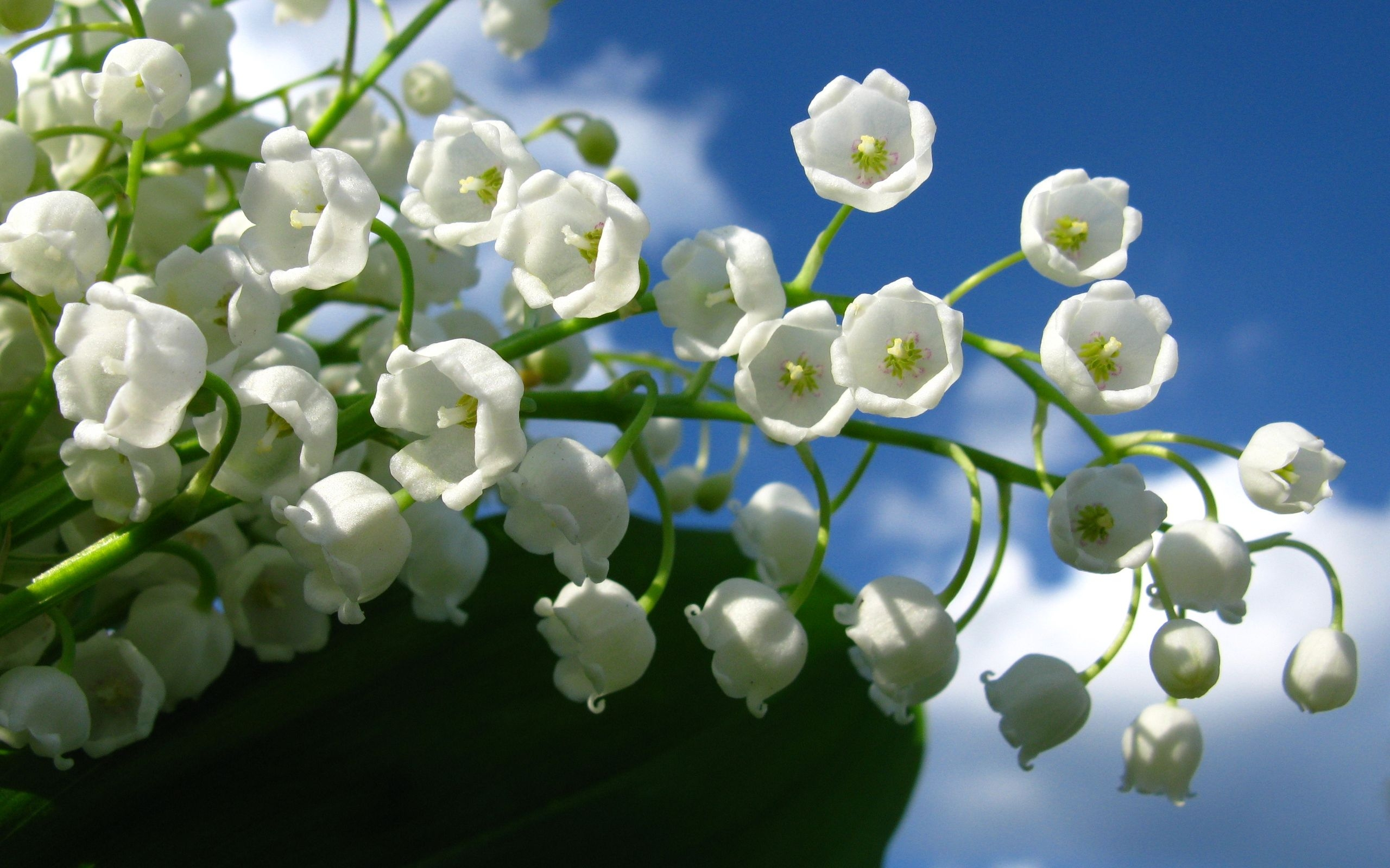 Little White Flowers Group