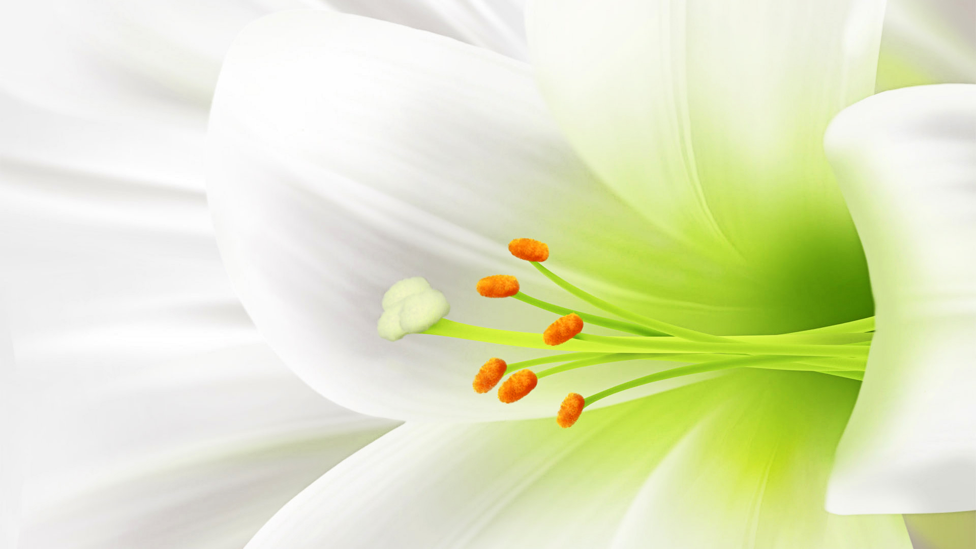 Lovely White Flowers Desktop Wallpaper Download Free 1920x1080px