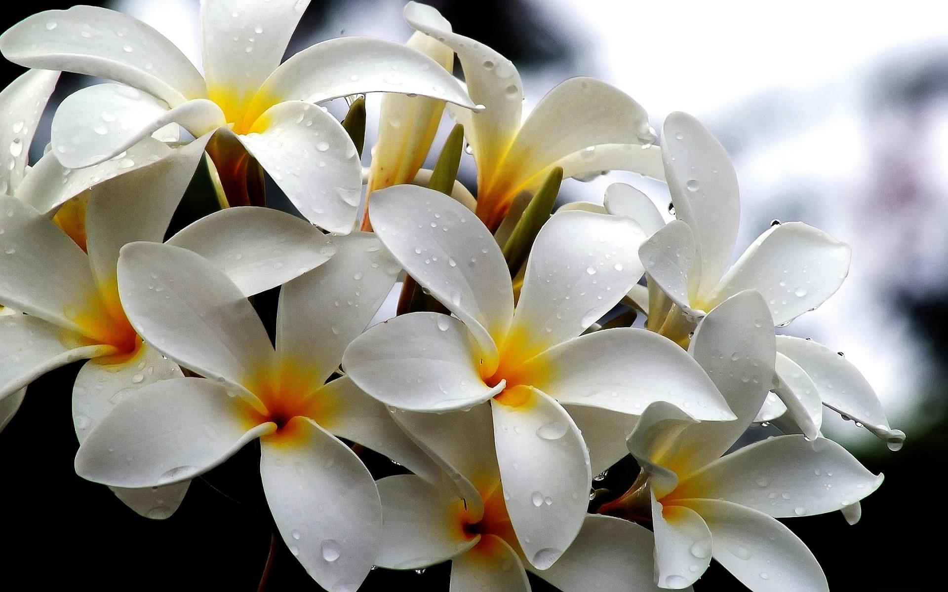 White Flowers High Resolution Wallpaper Iwalldesk