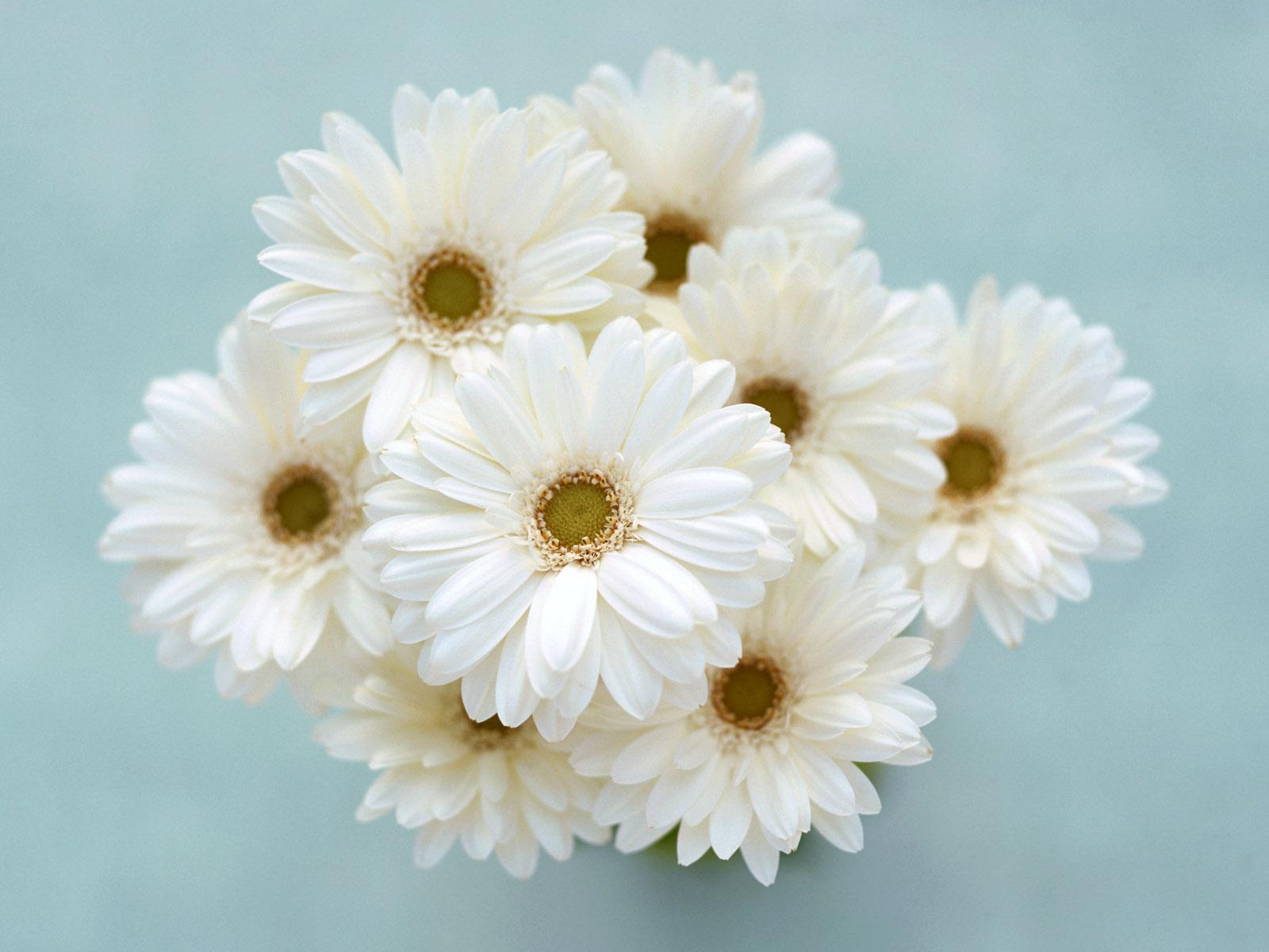 White Flowers 39943 1600x1200 px