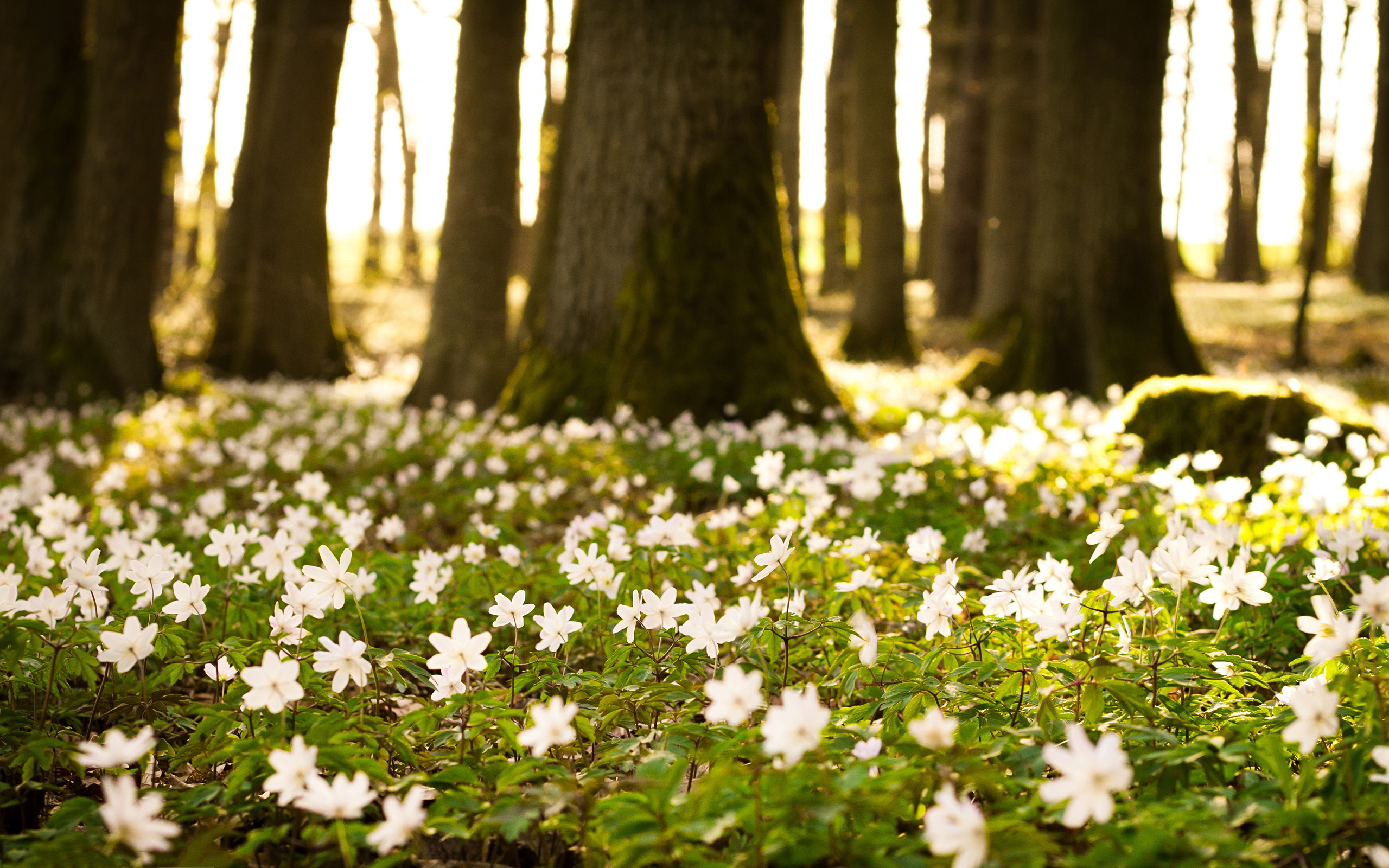 White flowers forest