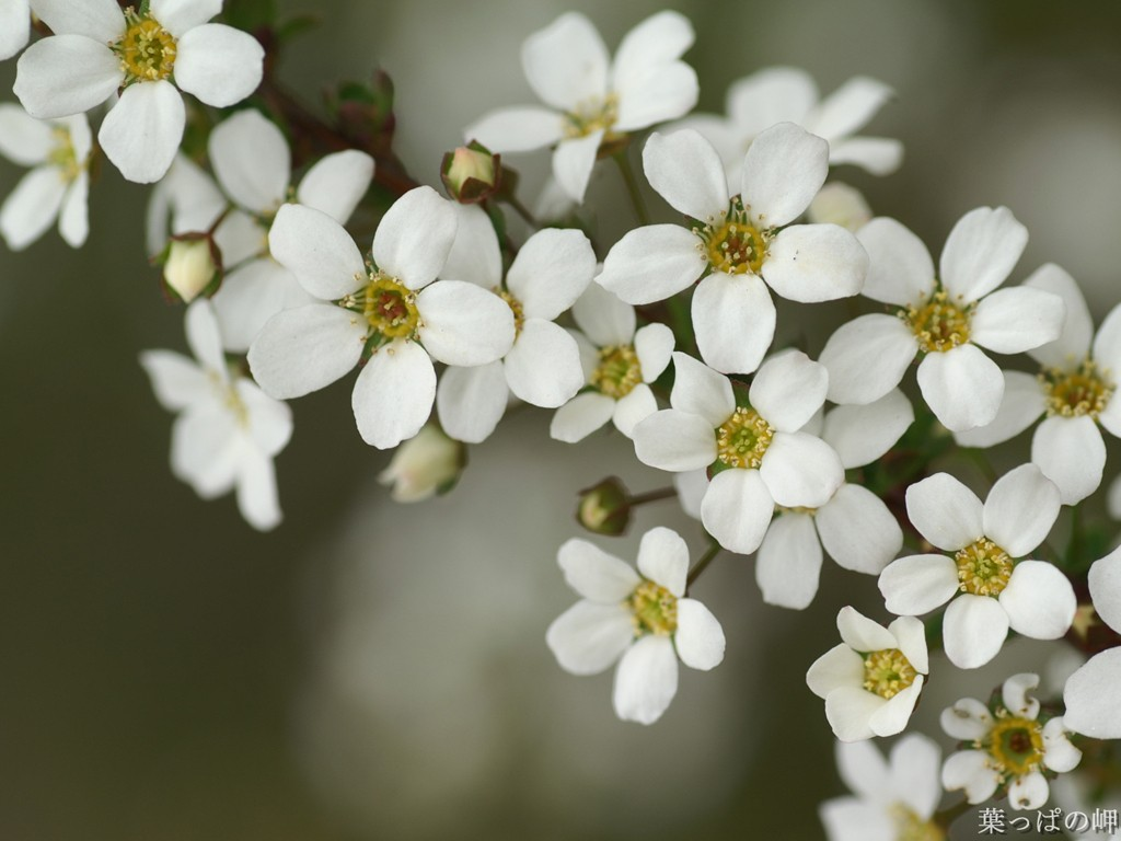 White flower wallpaper