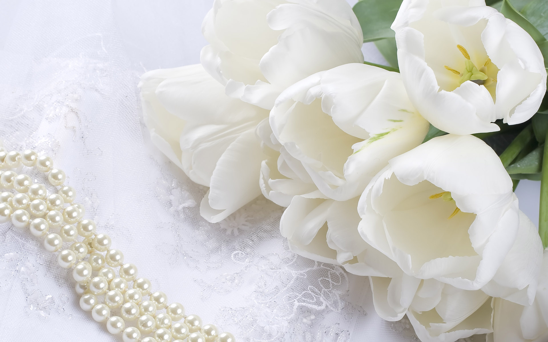 YouWall White Flowers Wallpaper wallpaperwallpapersfree