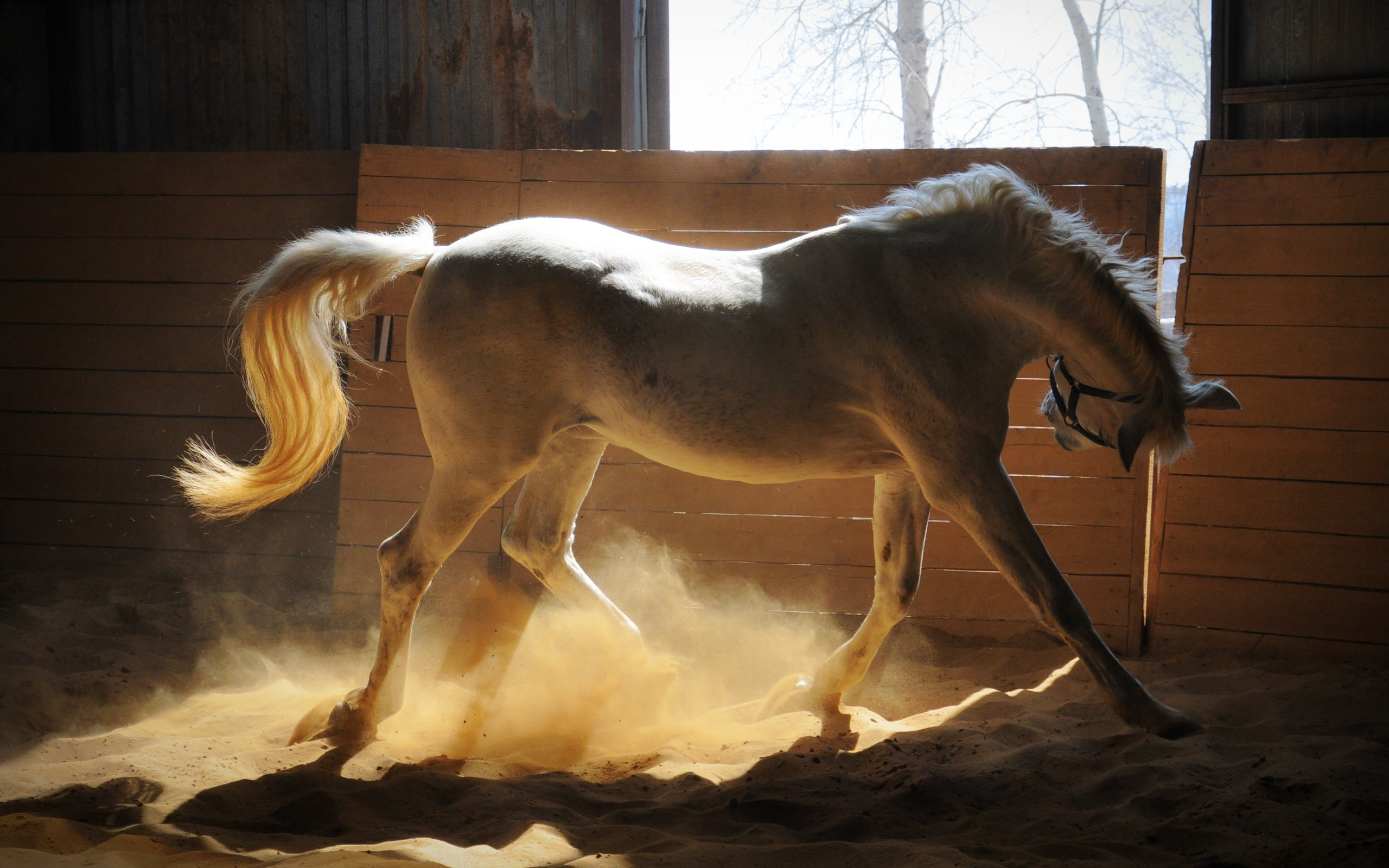 White Horse stable