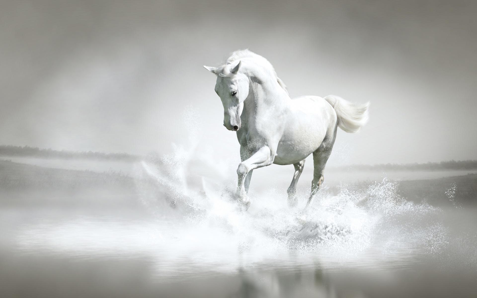White Horse 02