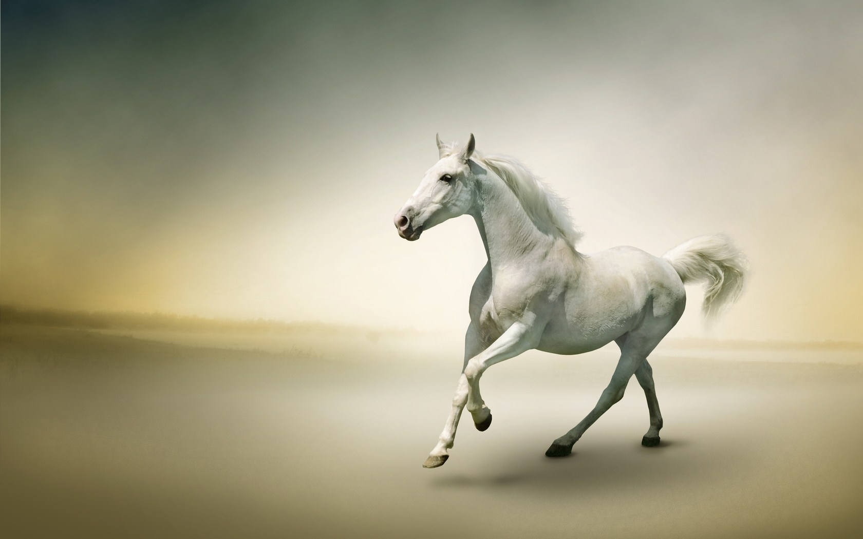 3d Beautiful White Horse Wallpaper 04
