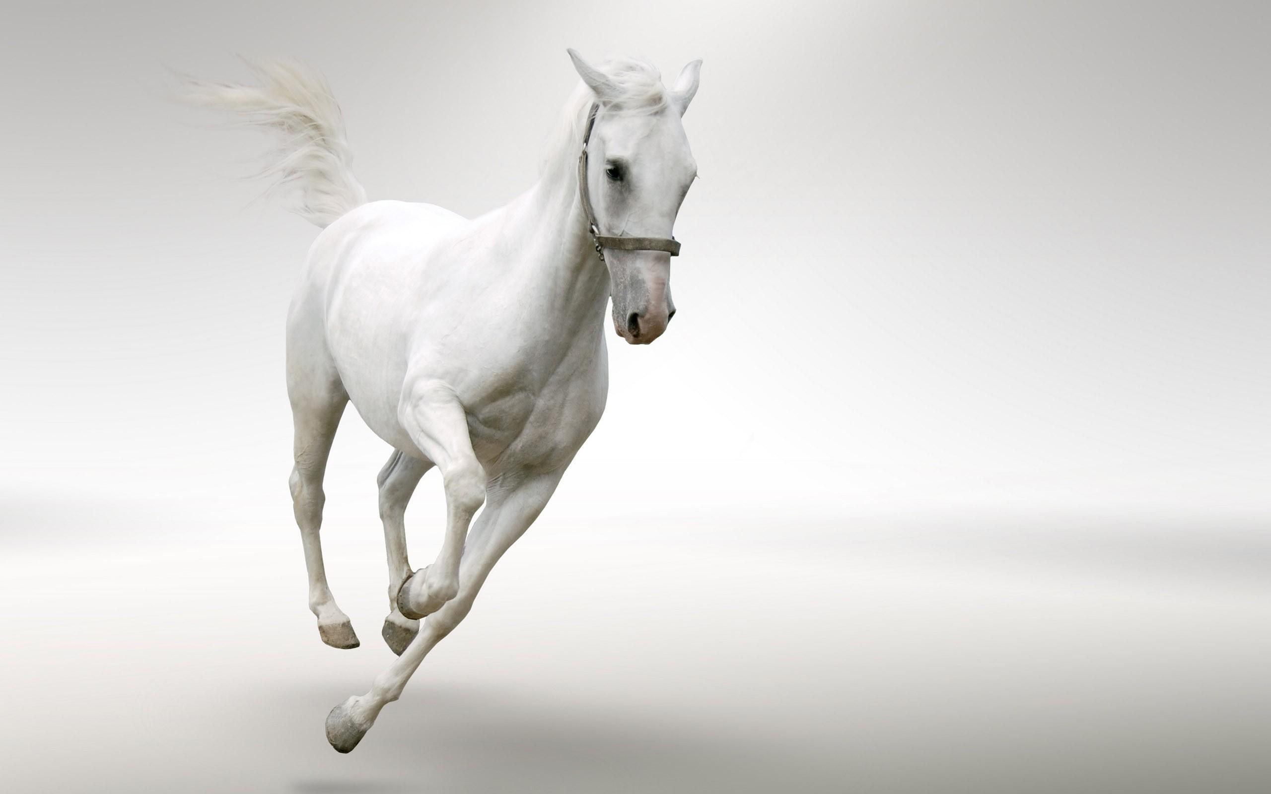 ... white-horse (4) ...
