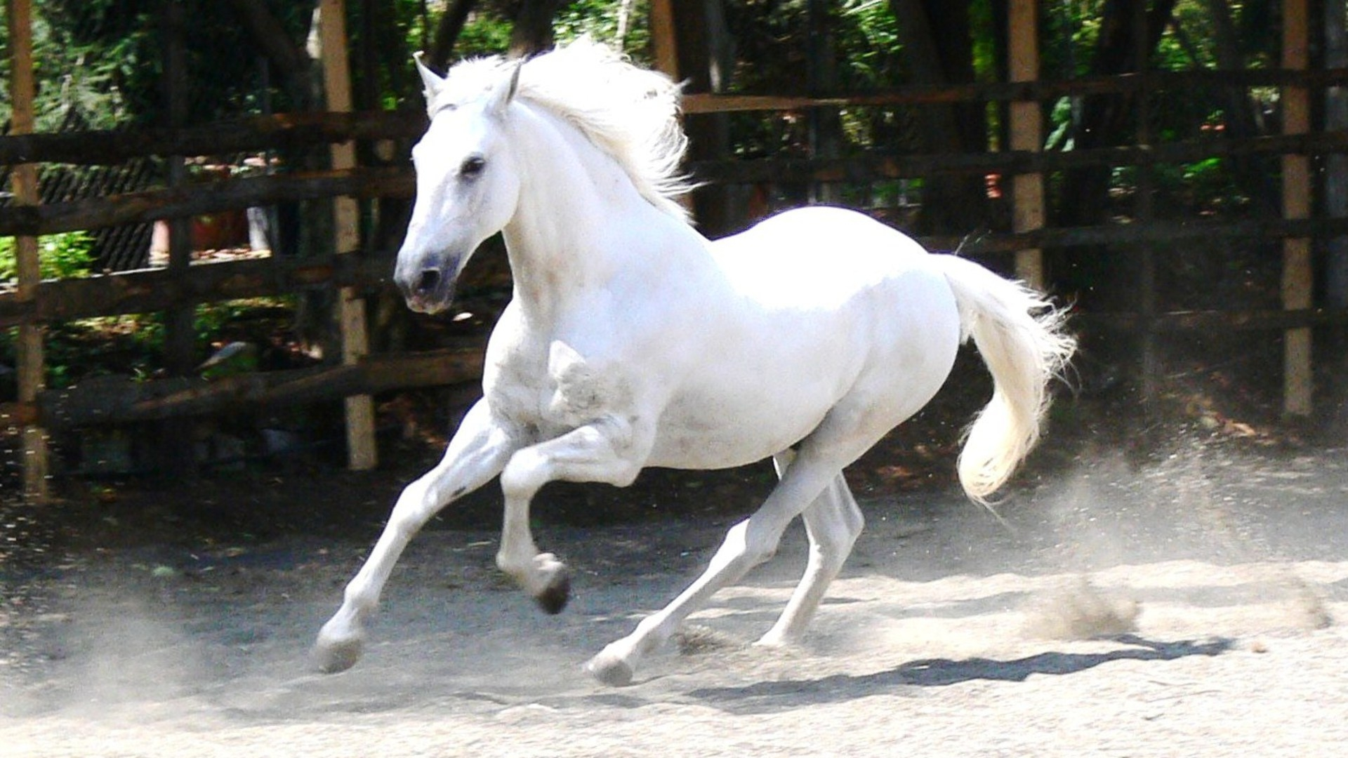 White Horse Hd Wallpapers - Lovely Desktop Background And Widescreen Images 01