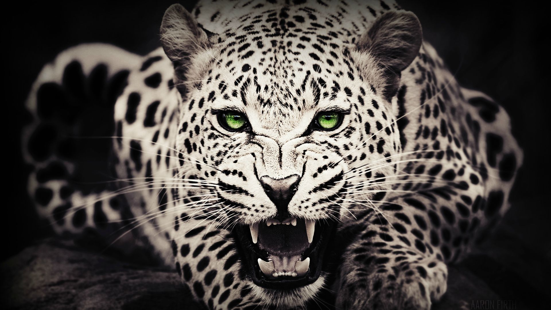 White Leopard Background