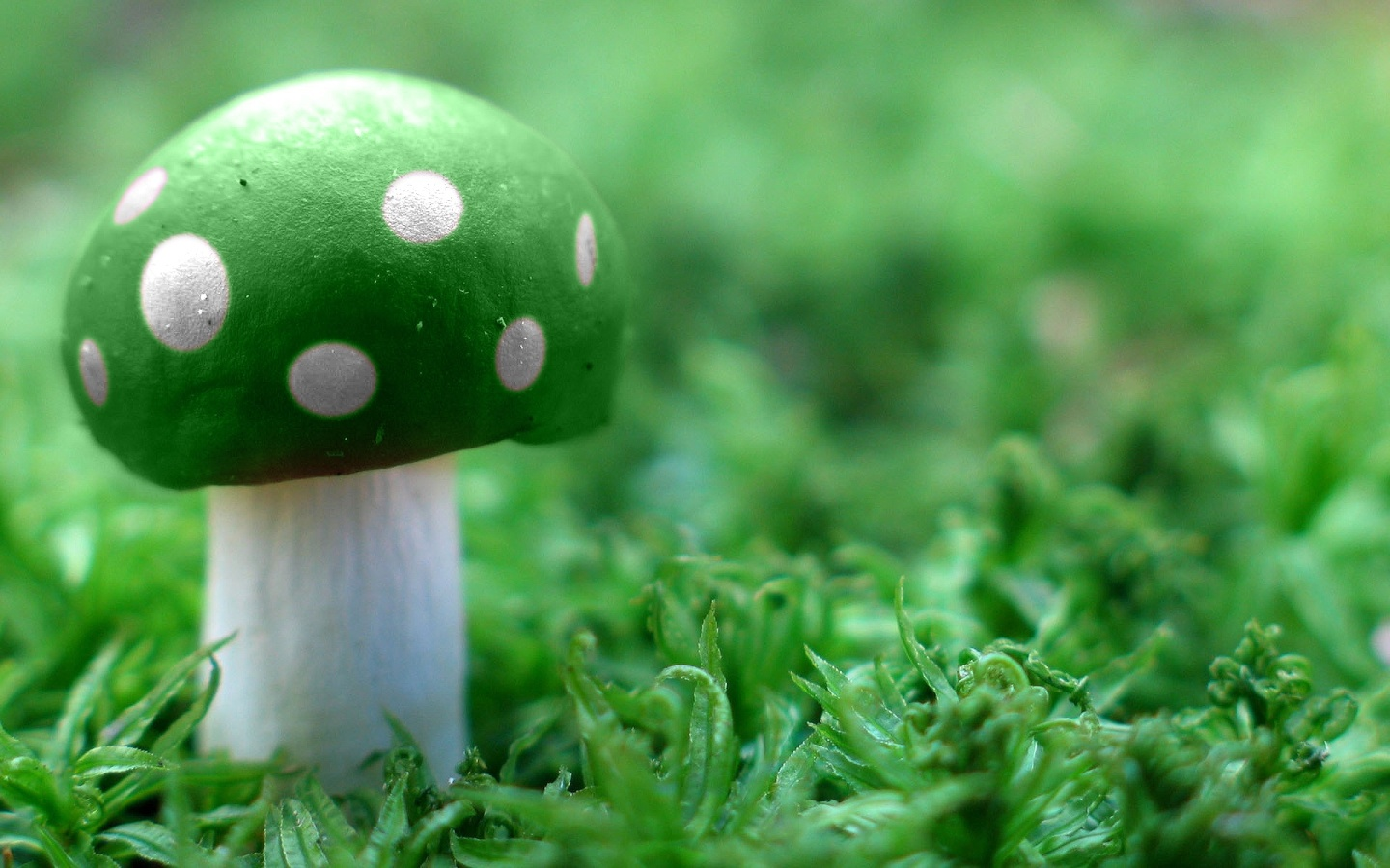 Download Green and White Mushroom Wallpaper : Widescreen : 1152 x 720 | 1280 x 800 ...