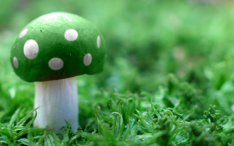White Mushroom Wallpaper