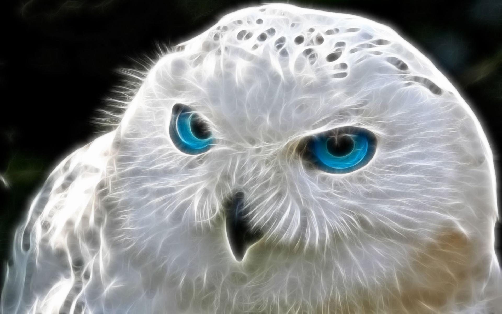 Stunning White Owl Wallpaper 1920x1200px