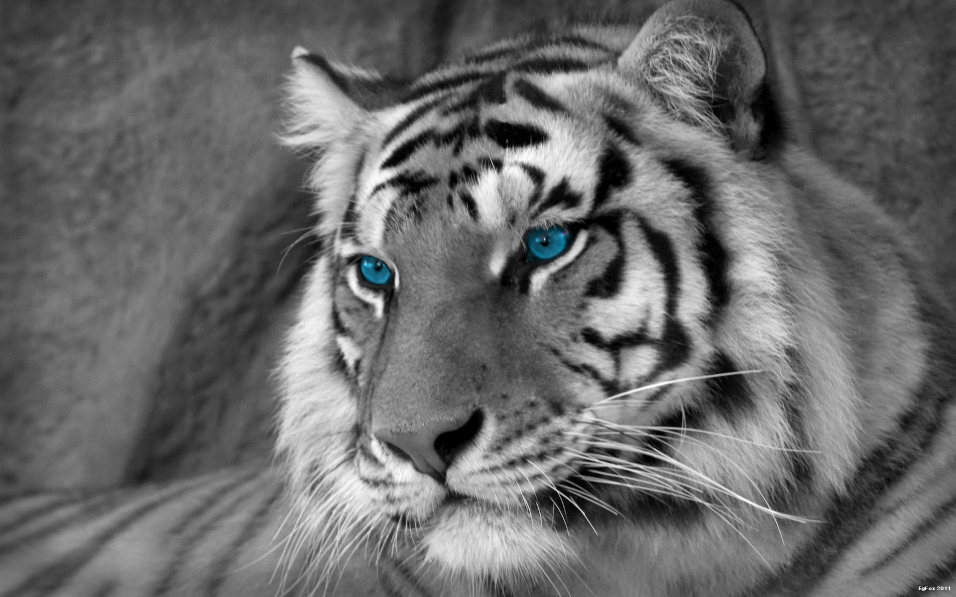 White Tiger Artistic Wallpaper