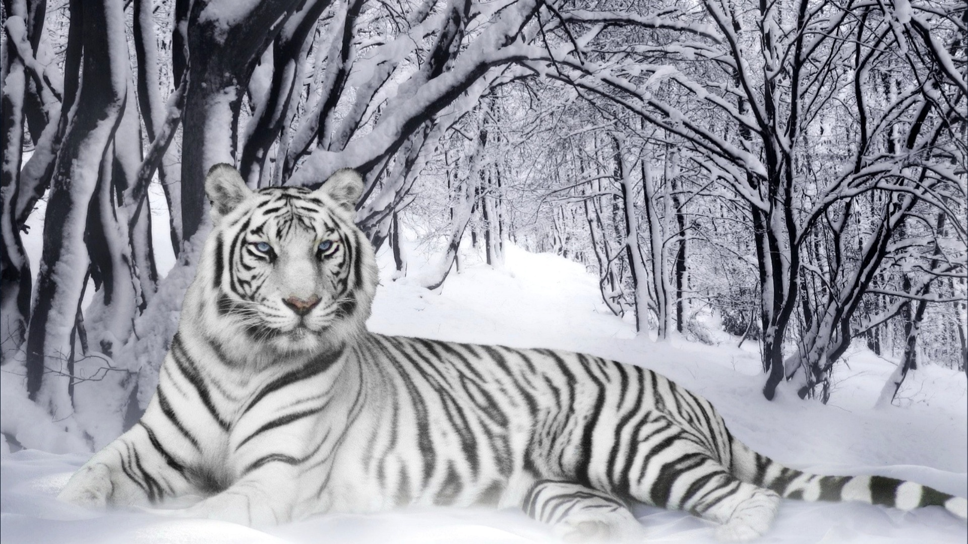 White Tigerfree widescreen