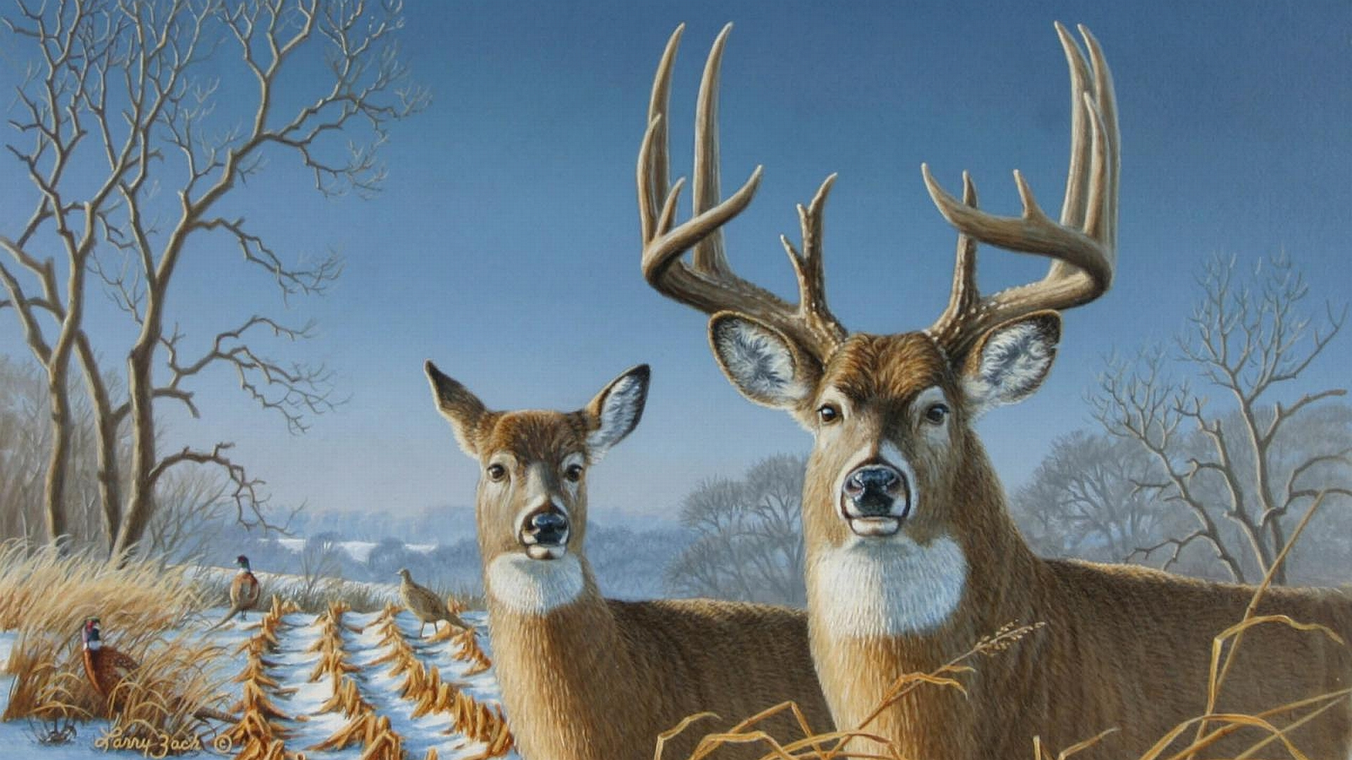 Whitetail Deer Wallpaper 1920x1080 75158