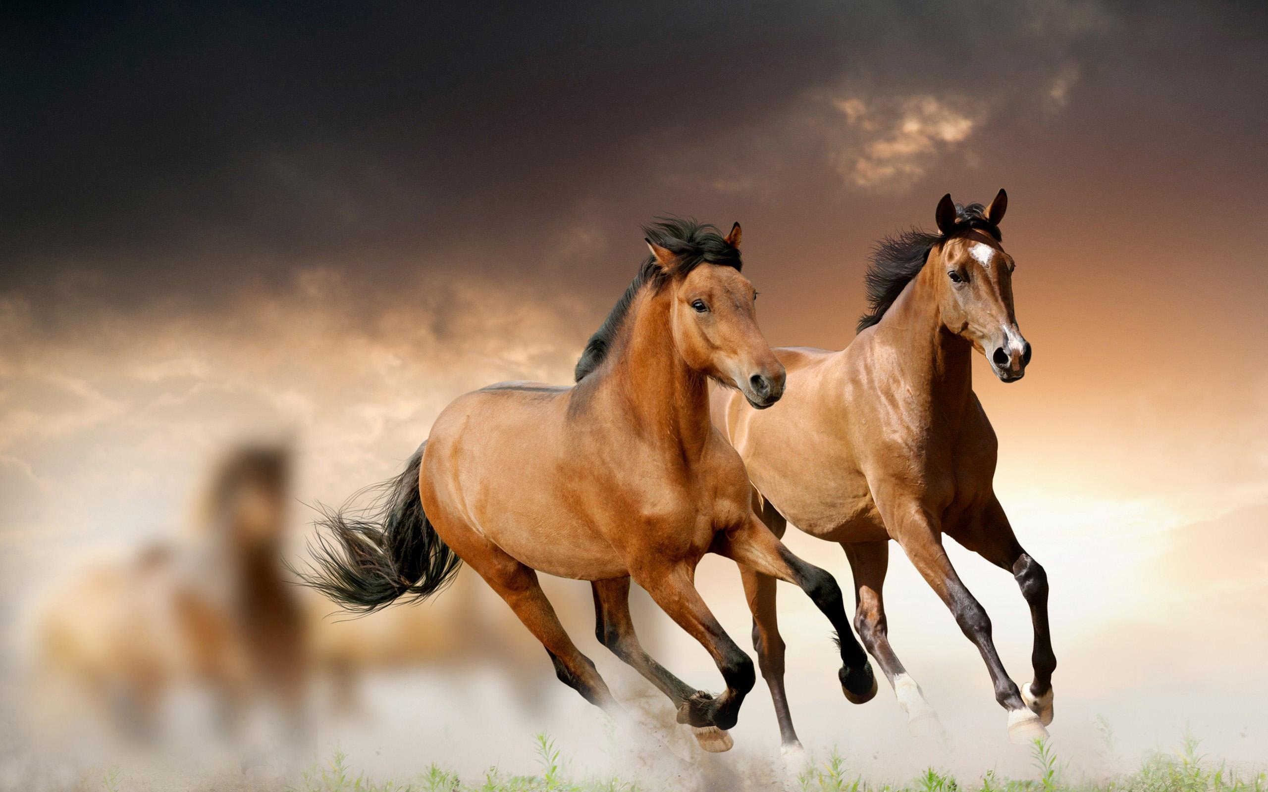 wild-horses-bulgaria