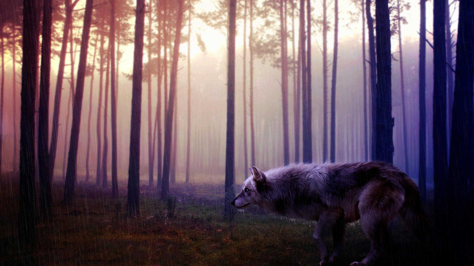 Wild wolf forest art