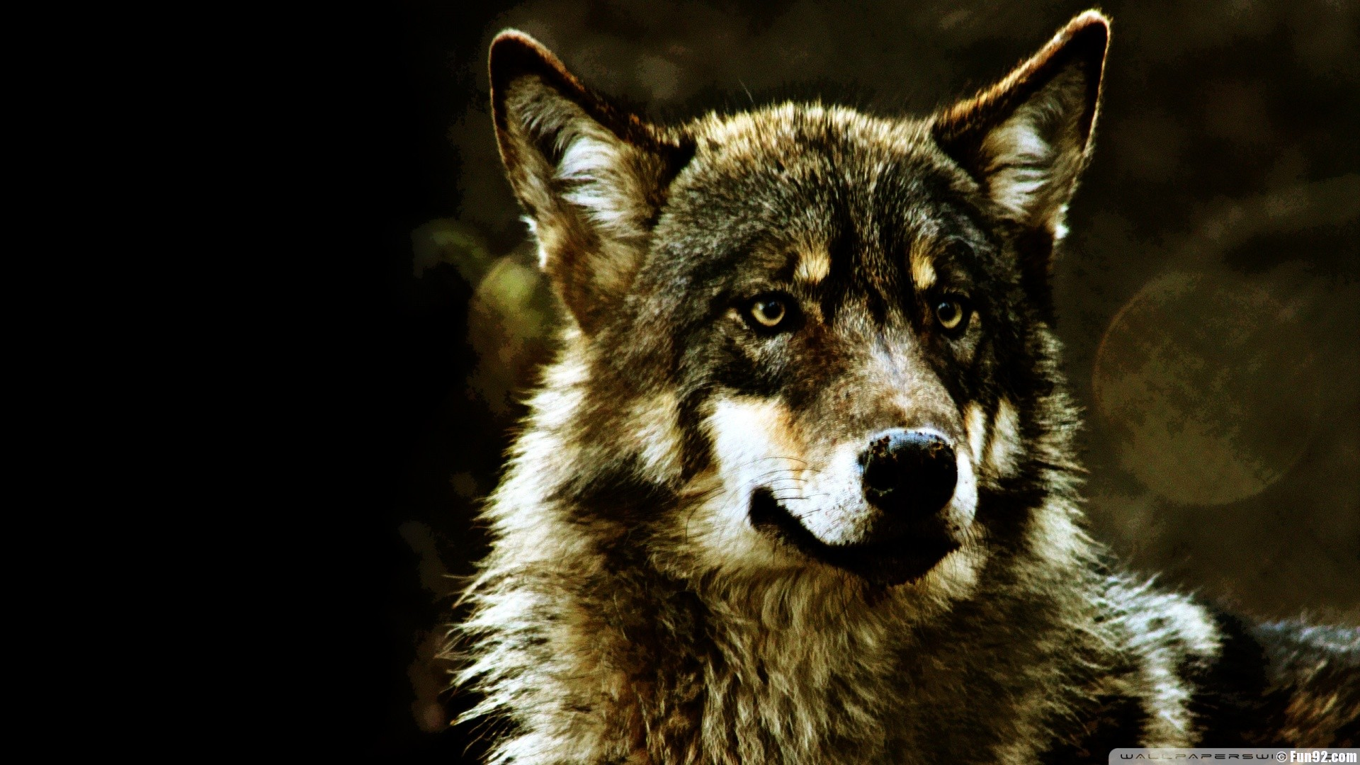 Wild Wolf Wallpaper #2