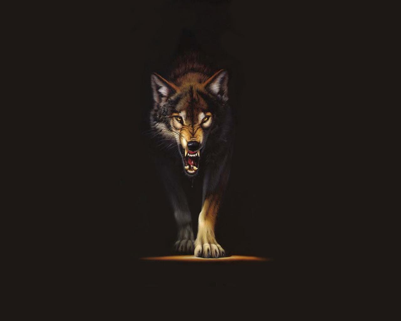 Wild Wolf Wallpaper #4
