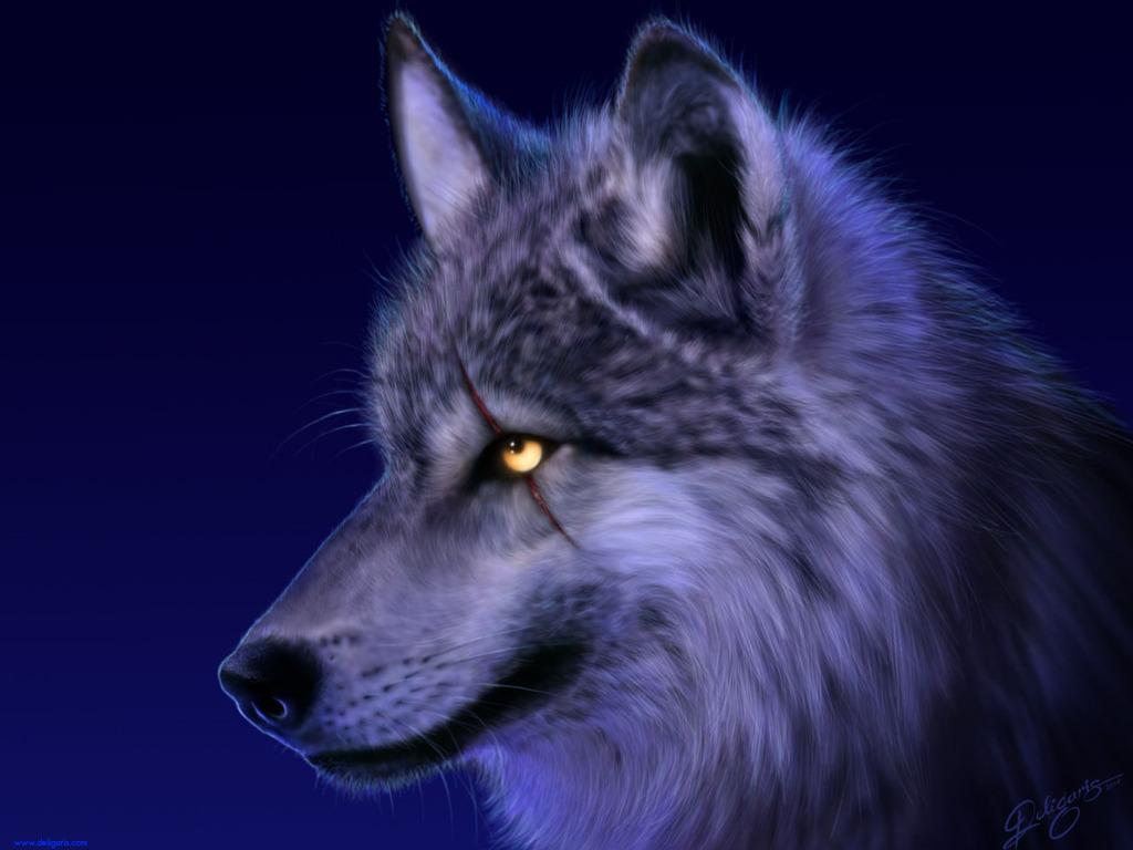 Wild Wolf Wallpaper #6
