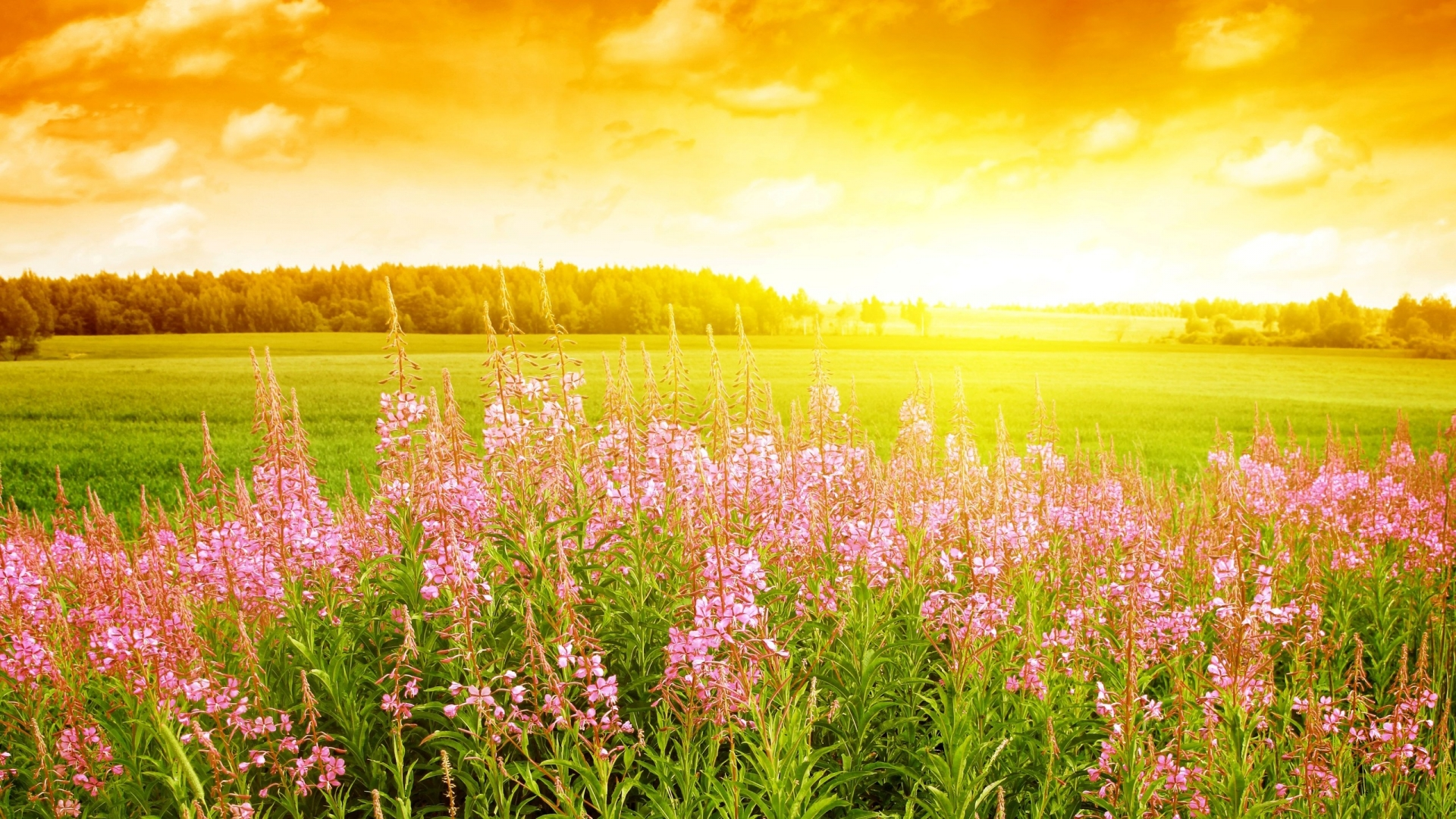 Wildflower Backgrounds