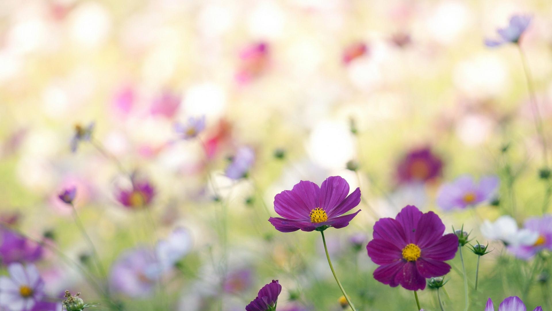 Flowers for Gt Wildflowers Wallpaper