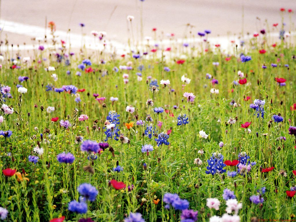 Wildflower Wallpaper Border