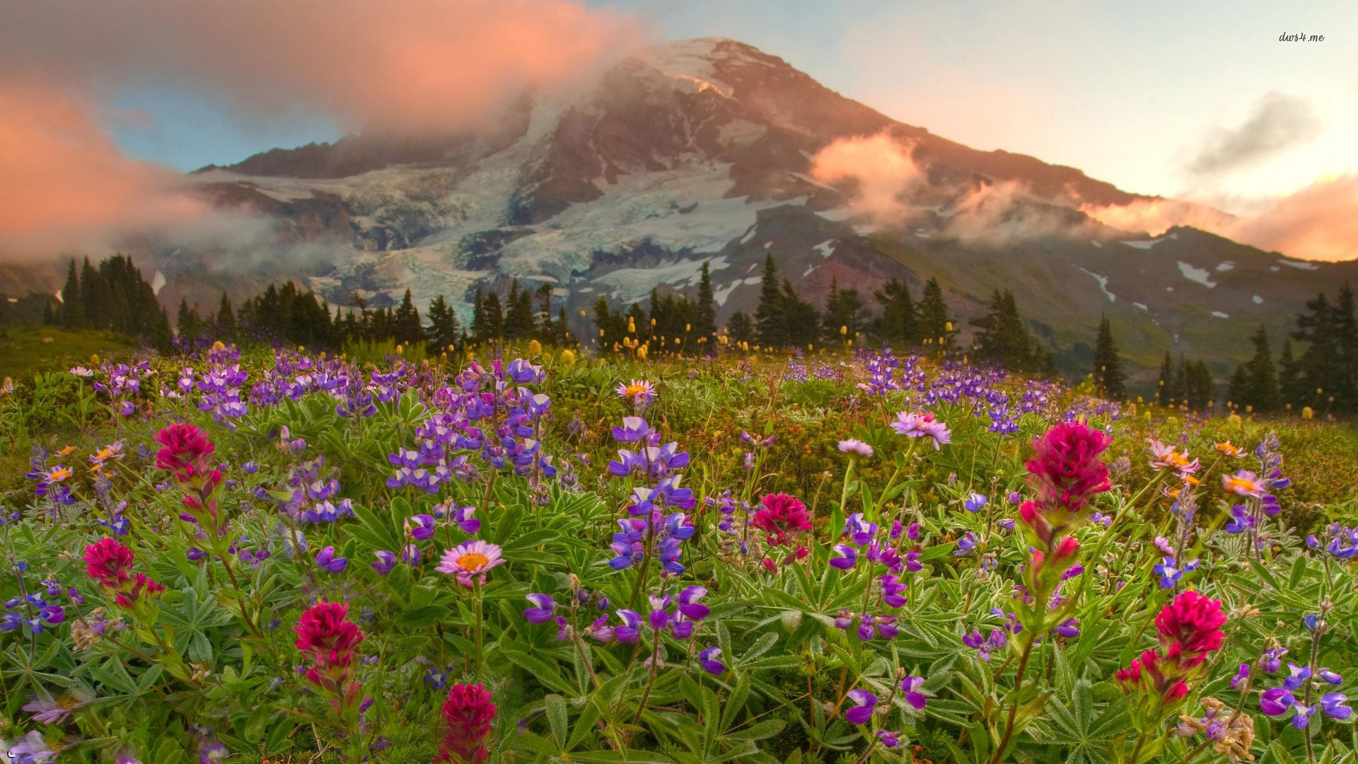 ... Wildflowers wallpaper 1920x1080 ...