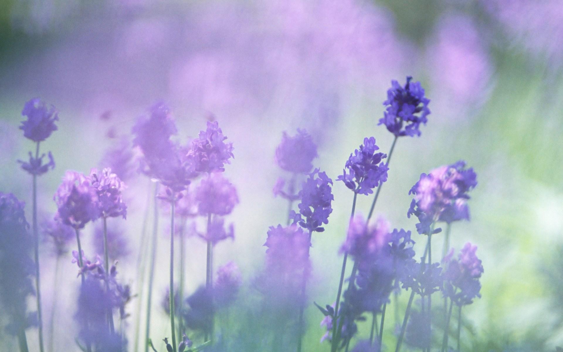 Wildflower Wallpapers