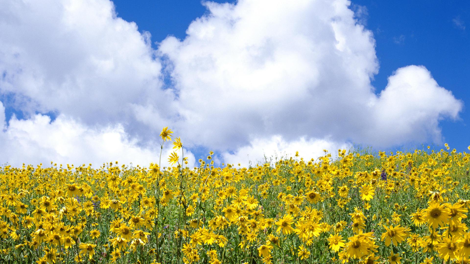 Photos Of Wild Flowers
