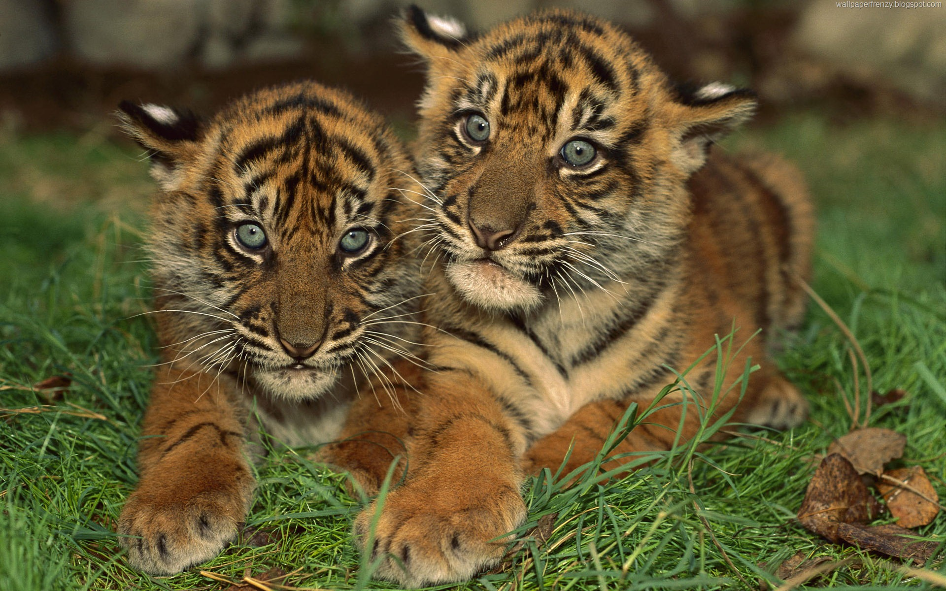 ... wild animals are and how well they play their role by being part of the eco-system. Choose from a range of high definition wildlife wallpapers from ...