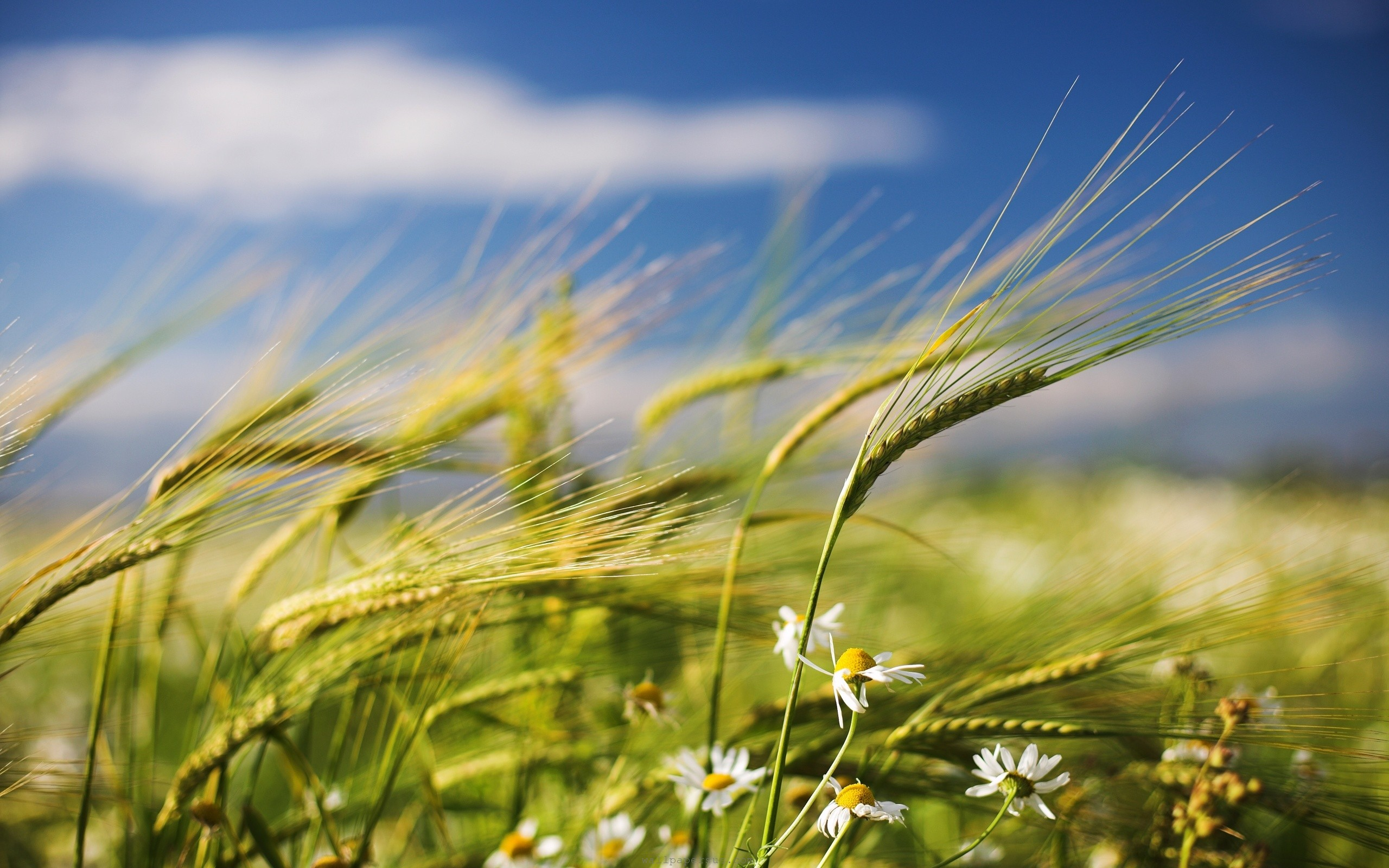 flowers-clouds-grass-nature-peaceful-sky-wind