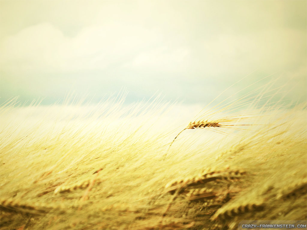Wind Wallpaper 12776