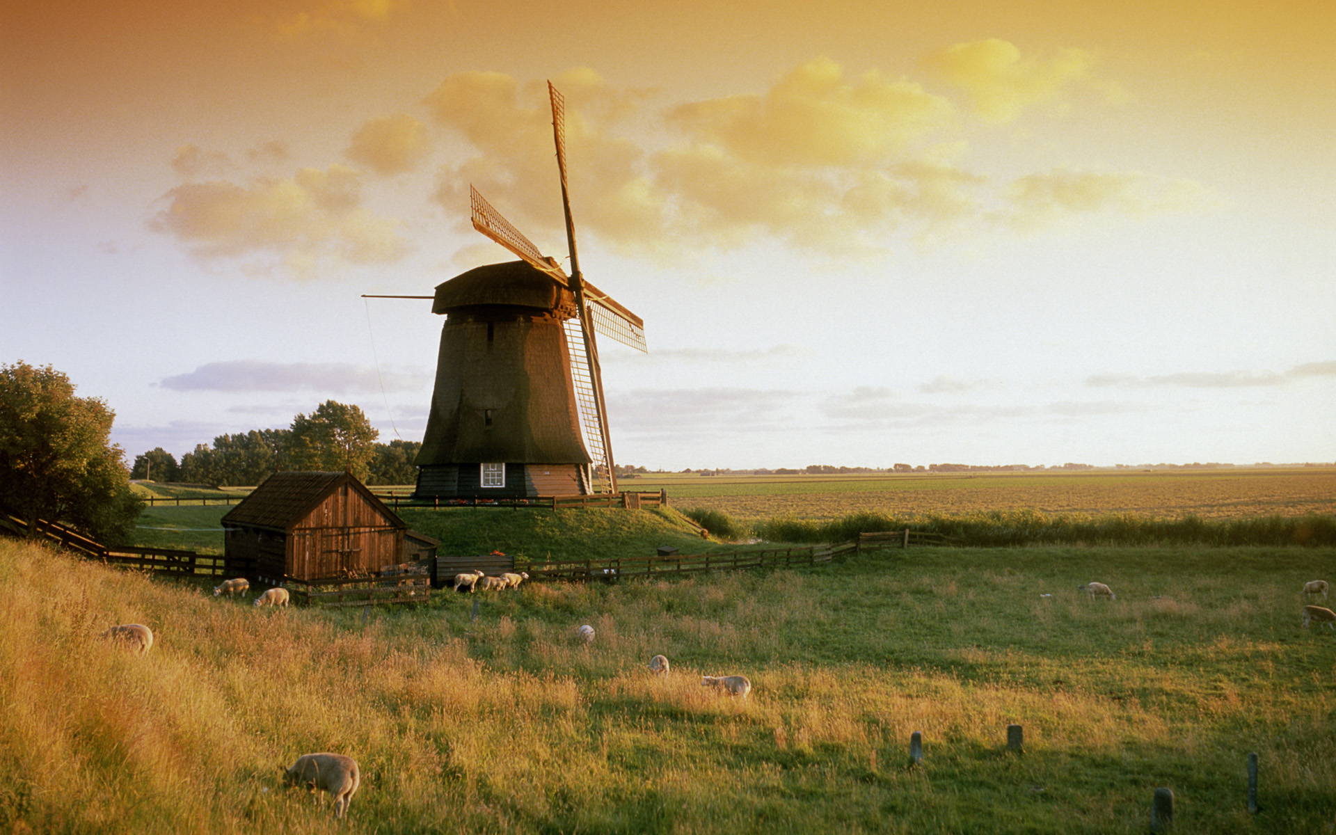 Windmill Wallpaper