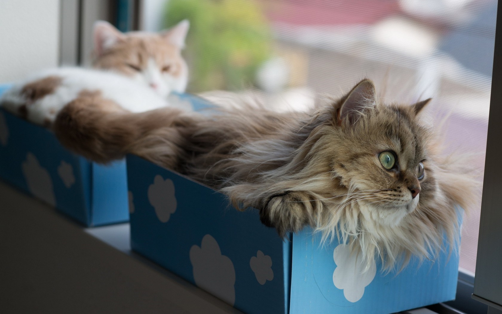Window Cats Boxes