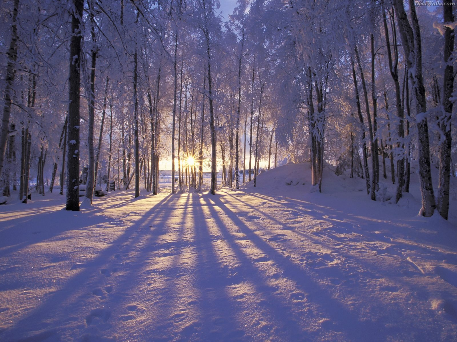Beautiful Christmas Winter Backgrounds