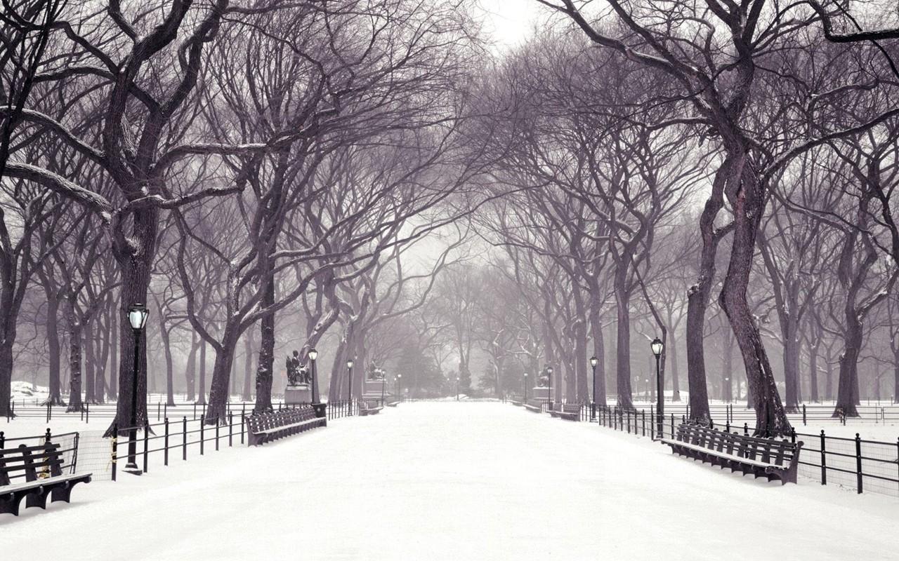 Winter Backgrounds Wallpaper 1280x800 51251